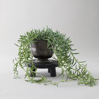 Terrain: Your Go-To For Beautiful Houseplants and Trees